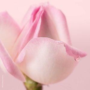 Agua de Limpieza Micelar Nuxe Paris con Petalos de Rosa 3