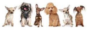 Alimento para Perros Pequeñas Razas Astro 15 Kg 2